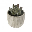 succulente pot cim collect h9, 3-fois assorti, gri