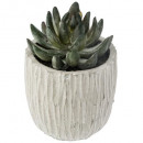 wholesale Garden & DIY store: succulent pot cim collect h14, 3- times assorted ,