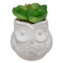 succulent pot owl h8, 3- times assorted , colors