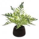 fern pot cim d14, multicolored
