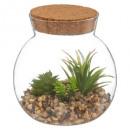 plante liege d13 h13, 3-fois assorti, transparent