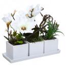 compo Magnolia platter crmq, 2- times assorted , W