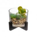 planta vidrio madera d13 h12, 3 veces surtido , mu
