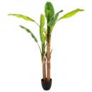 grossiste Plantes et pots: bananier double h160, vert