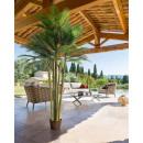 palmboom 5 stammen 3,6m, groen