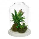 Großhandel Home & Living: terra h20 pflanze mdf basis, transparent