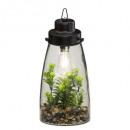 terrarium ampoule plante h31, transparent