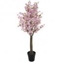 cerisier rose h200, rose clair