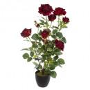 rosier velours h74, 2-fois assorti, couleurs assor
