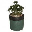 arty plant cim h18, 2- maal geassorteerd , gesorte