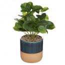 plante pot reactive, 3-fois assorti, multicolore