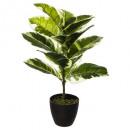 green plant bico h60, green