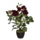 rosier velours 43cm, 2-fois assorti, couleurs asso