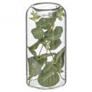 eucalyptus tube candle holder glass h15, transpare