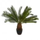 pineapple plant h93, green