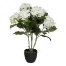 hortenzia h60, fehér