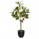 lemon tree h70, multicolored