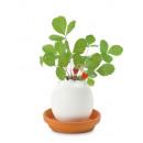 wholesale Plants & Pots:Eggling - Wild Erbeere