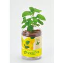 mayorista Plantas y macetas:Verde PET - limón