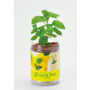Großhandel Pflanzen & Töpfe: Green PET - Zitronenmelisse