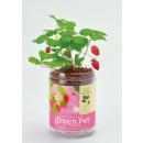 wholesale Plants & Pots: Green PET - Wild Strawberry