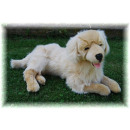Liegender Golden Retriver, 60 cm