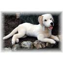 Liegen Labrador, room, 60cm