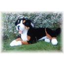 Liegender Berner Sennenhund, 42 cm