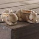 Rabbit lying brown