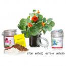 Großhandel Garten & Baumarkt:Blumengartengewächsh aus Kapuzinerkresse