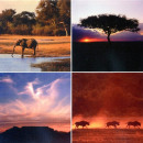 ingrosso Home & Living: 4 murales  Africa   di 25 x 25 cm Savannah
