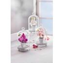 Glasglocken mit Orchidee, 3er Set