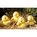 Sweet chick medium Easter