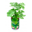 wholesale Garden & DIY store: Four-leaf clover with cans