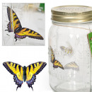 Butterfly in a jar - Swallow the queen