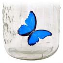 Butterfly in a jar - Blue morpho