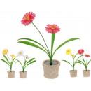 Grosshandel Pflanzen & Töpfe: 2 Solar Blumen im Topf (4 Modelle)