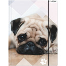 Dog A / 4 rubber folder
