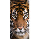 wholesale Bath & Towelling: Tiger, Tiger bath towel, beach towel 70 * 140