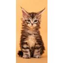 Großhandel Bad- und Frottierwaren: Katze, die Katze  Badetuch Badetuch 70 * 140
