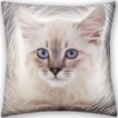 Cat, The Cat pillow, cushion 40 * 40 cm