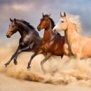 nagyker Ágyneműk és matracok: Lovas, The Horses párnahuzat 40*40 cm