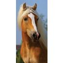 Großhandel Bad- und Frottierwaren: Reiter, die Pferde Badetuch Badetuch