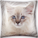 Cuscino gattino, cuscino decorativo 40 * 40 cm