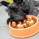 ingrosso Automobili: SLOWFI: Ciotola per cibo per cani anti-ghiottone