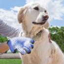 groothandel Bad- & handdoeken: Borstel voor het verzorgen van dierenhaar
