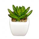 grossiste Pots de fleurs & Vases: MINI CACTUS DANS MINI POT PORCELAINE