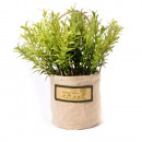 grossiste Pots de fleurs & Vases: MINI ROMARIN DANS POT EN TISSU