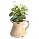 grossiste Pots de fleurs & Vases: MINI BROC  CERAMIQUE AVEC PLANTE VERTE