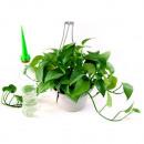 Grosshandel Pflanzen & Töpfe: Bewässerung  Zimmerpflanzen 4 PC TV